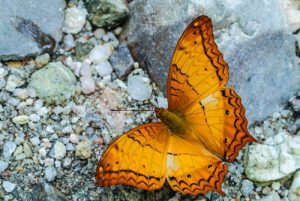 Orange butterfly on rocks